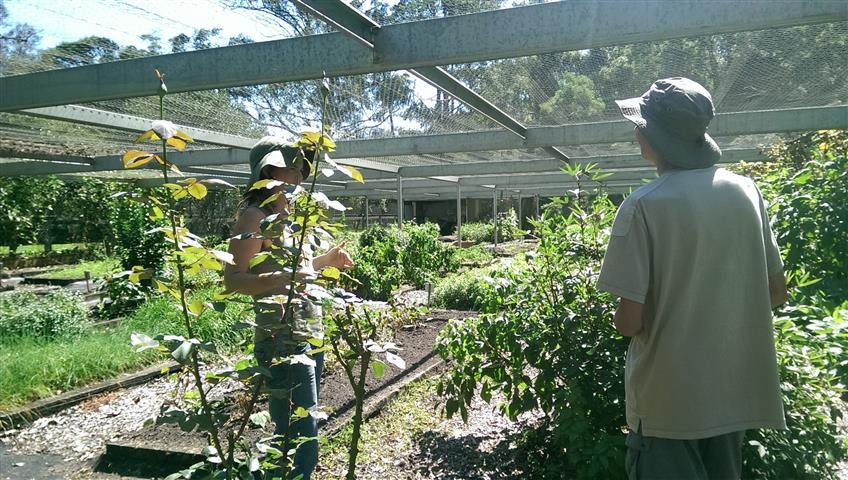 Veggie Garden in Ashram