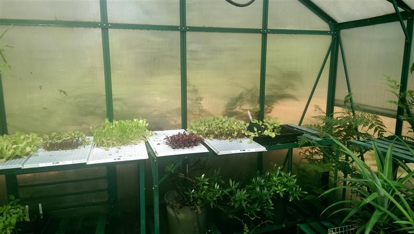 Farm nursery, tool shed