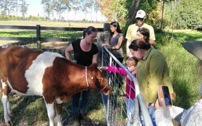 参观本地小型有机农场Grace Spring Farm. Visit Grace Spring Farm