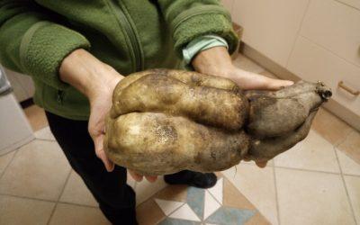 冬日晚上-围着壁炉烤红薯和栗子 Roast Sweet Potatoes & chestnuts in a Winter Night