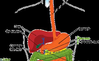 非酒精性脂肪肝 Non-alcoholic fatty liver NAFLD